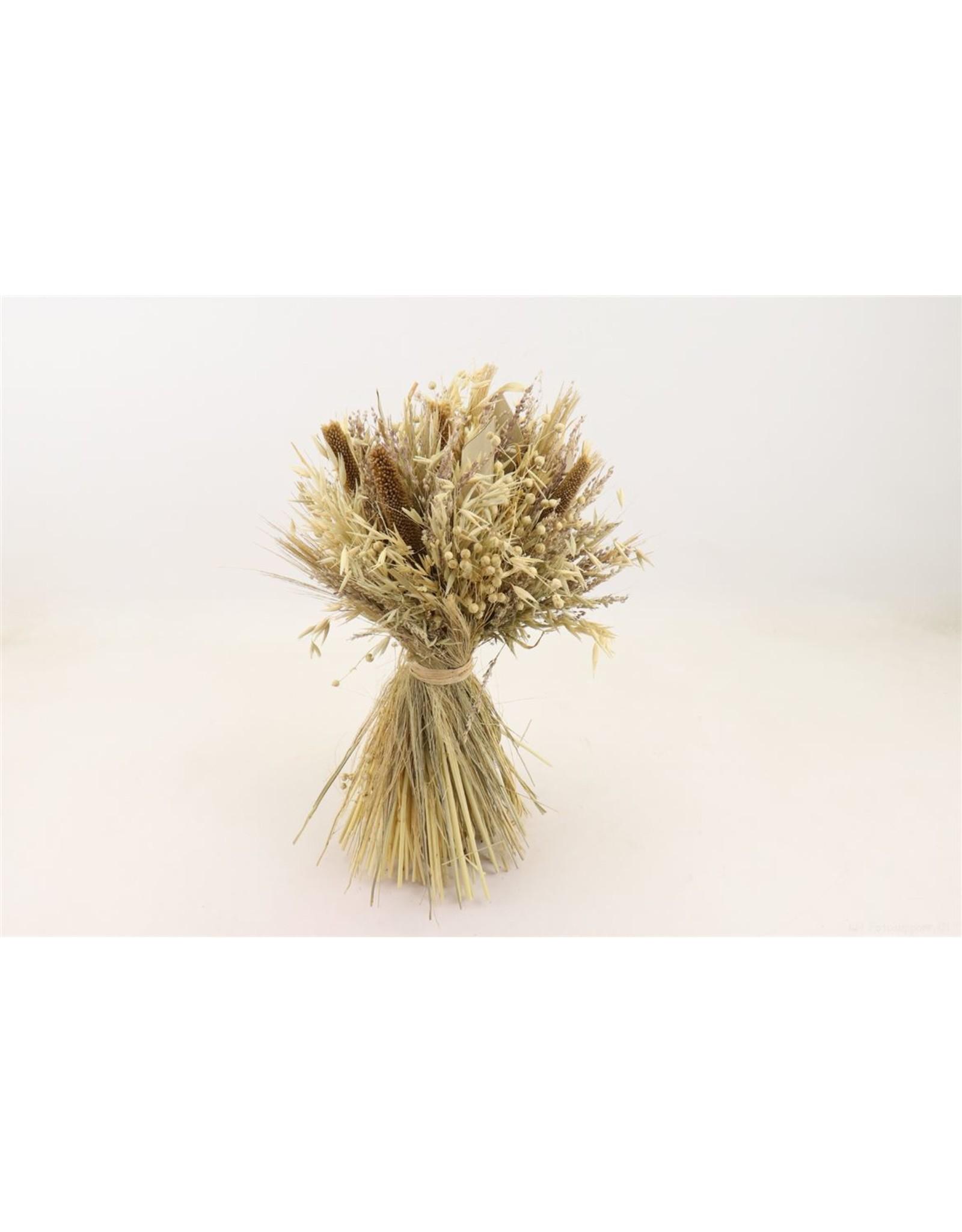 Dried Bouq. Sheaf D. Harvest 30cm White x 1