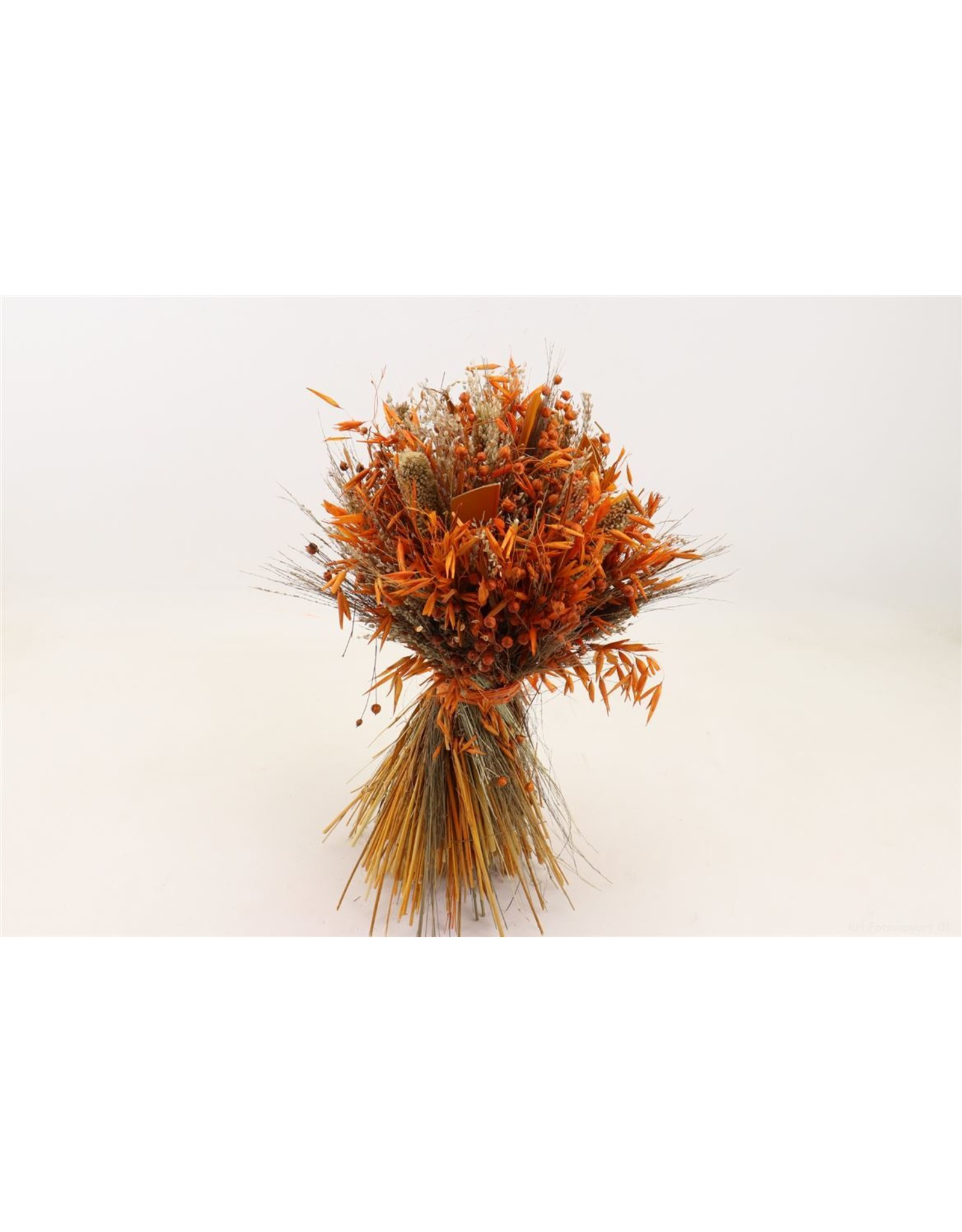 Dried Bouq. Sheaf D. Harvest 45cm Orange x 1
