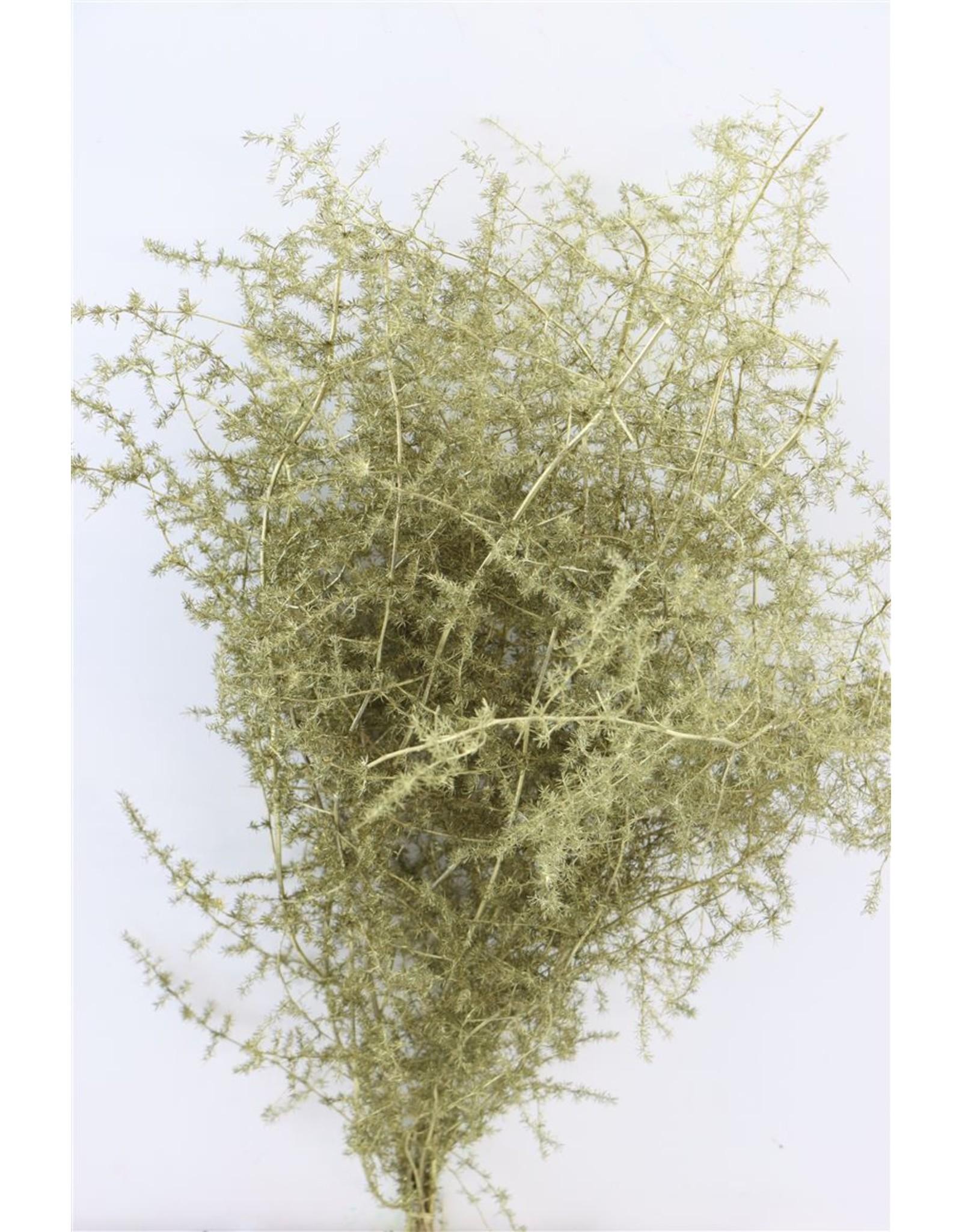 Dried Asparagus Wild Gold Bunch x 2