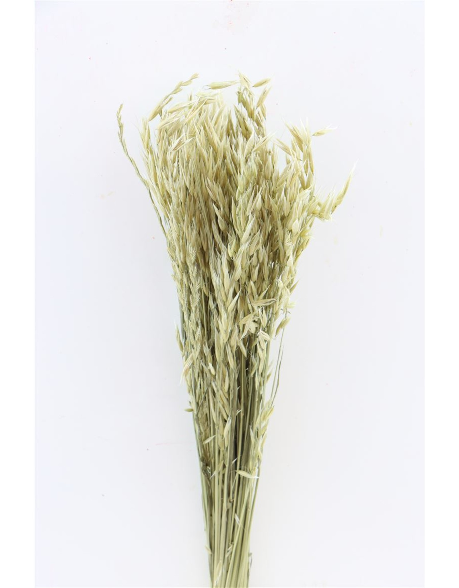 Dried Avena (haver) Natural Bunch x 2