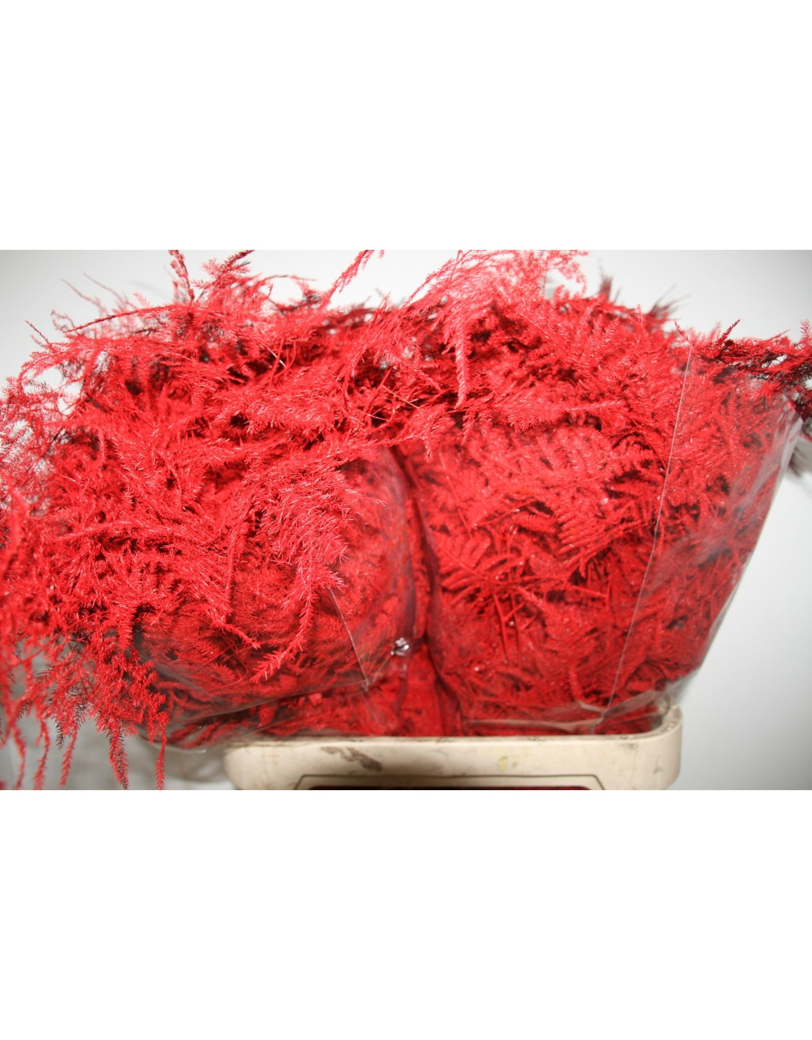 Asp. Lang Get. Red x 50