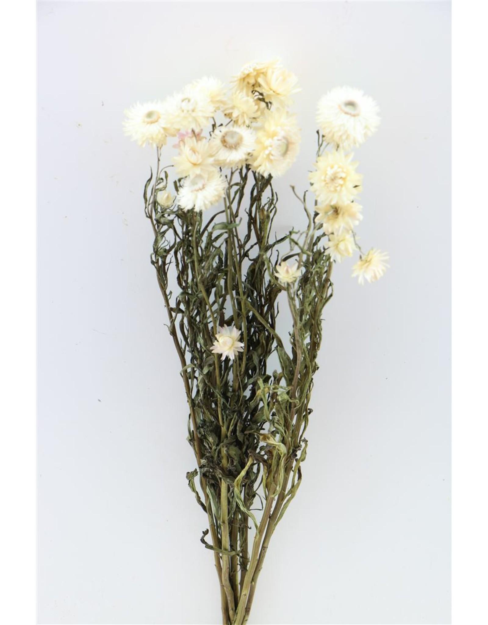 Dried Helichrysum White Bunch x 2