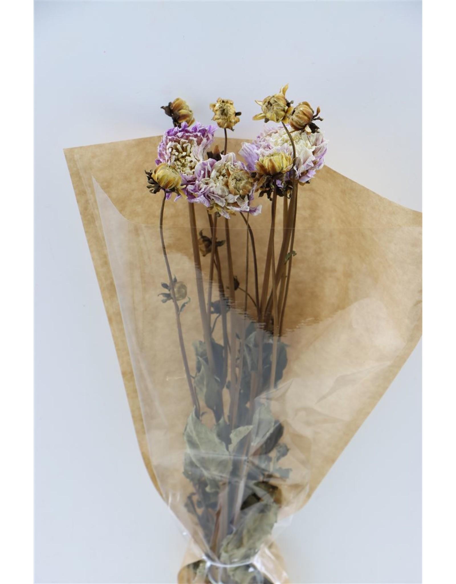 Dried Dahlia White/lila Bunch x 2