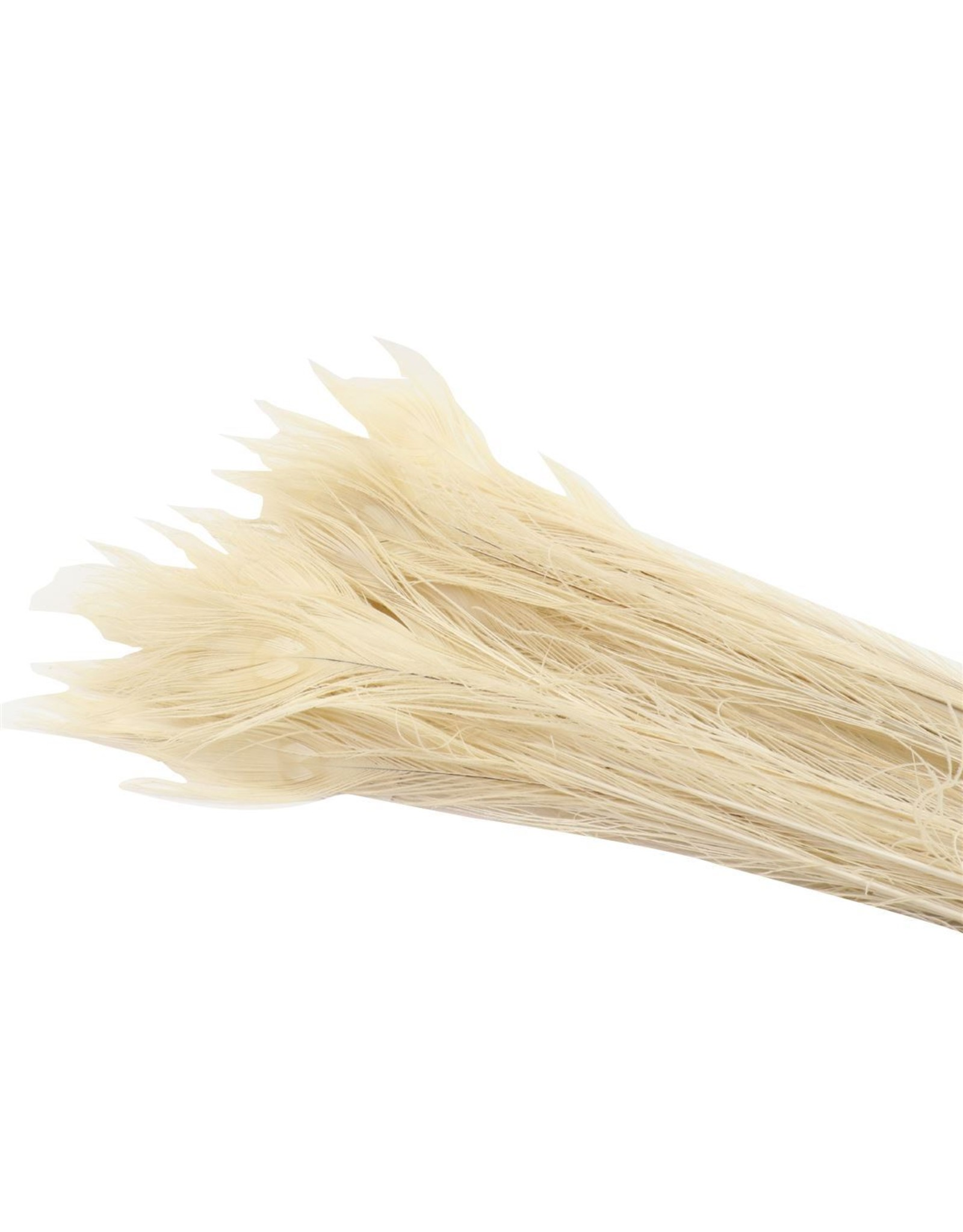 Dried Feather Peacock Bleached x 50