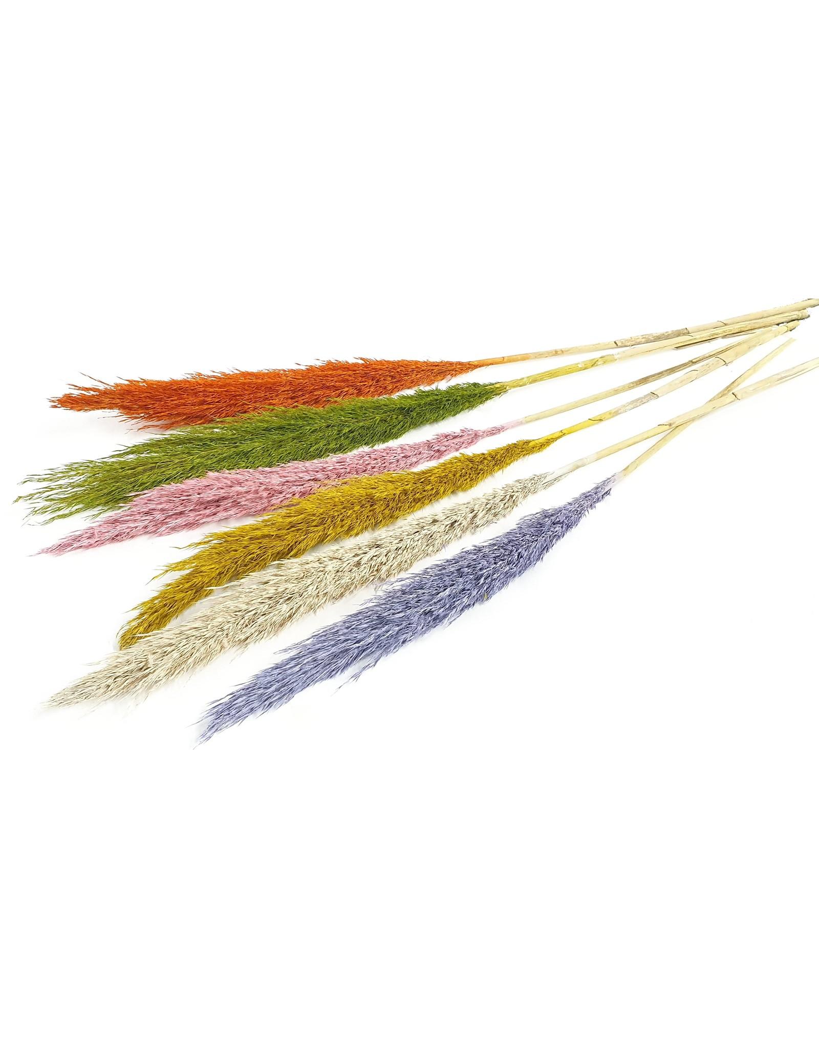 Cane Arundo 125cm per stem Mixed colours x 60