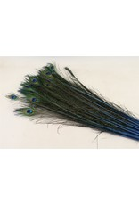 Dried Feather Peacock Natural/blue x 50