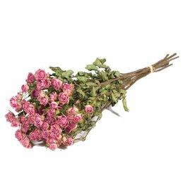 Roses spray light pink natural x 20