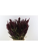 Dried Amaranthus Red Bunch x 2