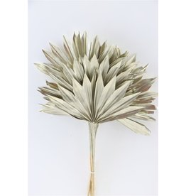 Dried Palm Sun 6pc Platinum Bunch x 3