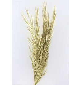 Dried Palm Leaf Gold 5pc Bunch x 1
