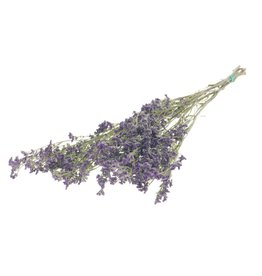 Limonium natural purple x 35