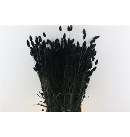 Dried Phalaris Black Bunch x 2
