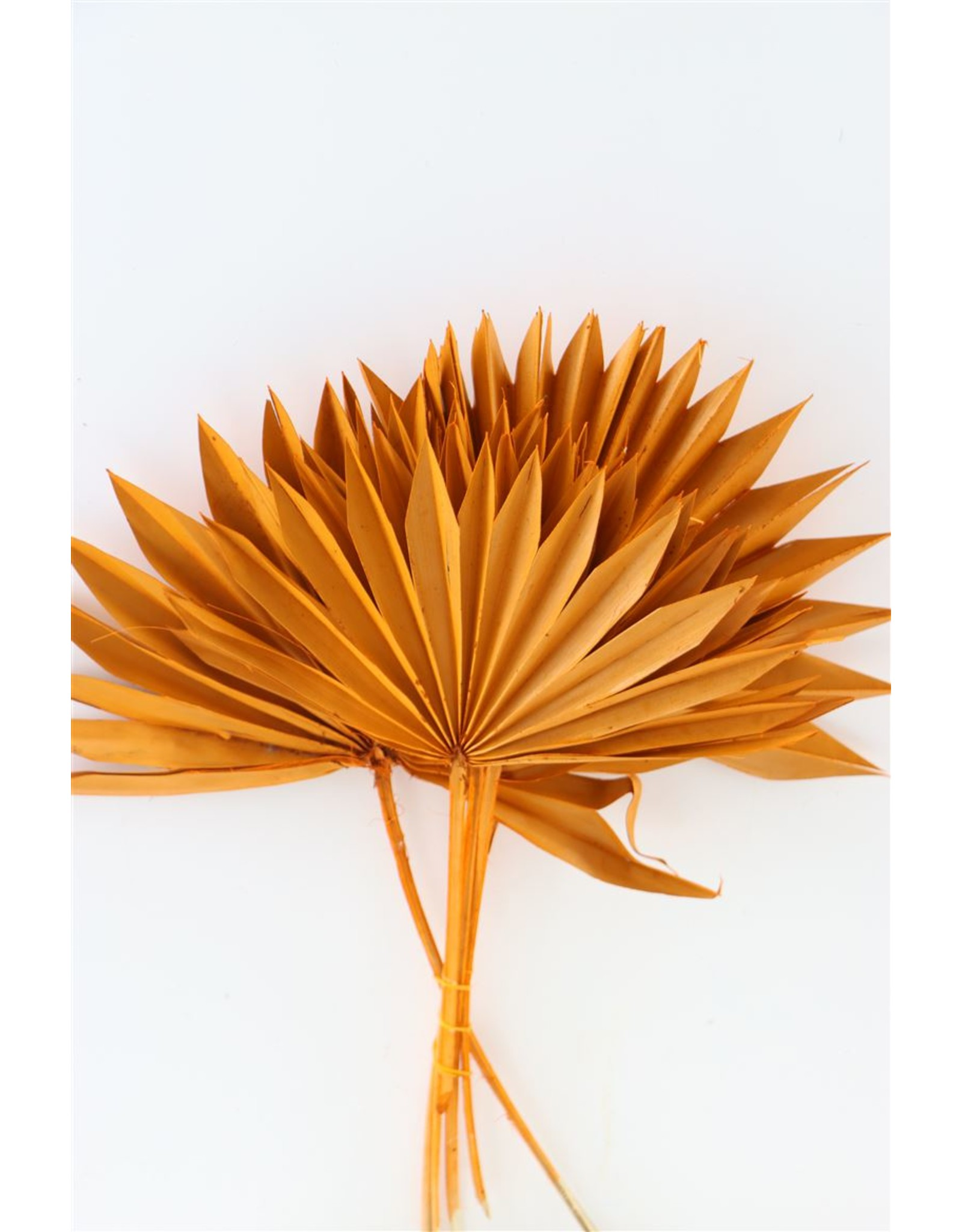 Dried Palm Sun 6pc Orange Bunch x 3