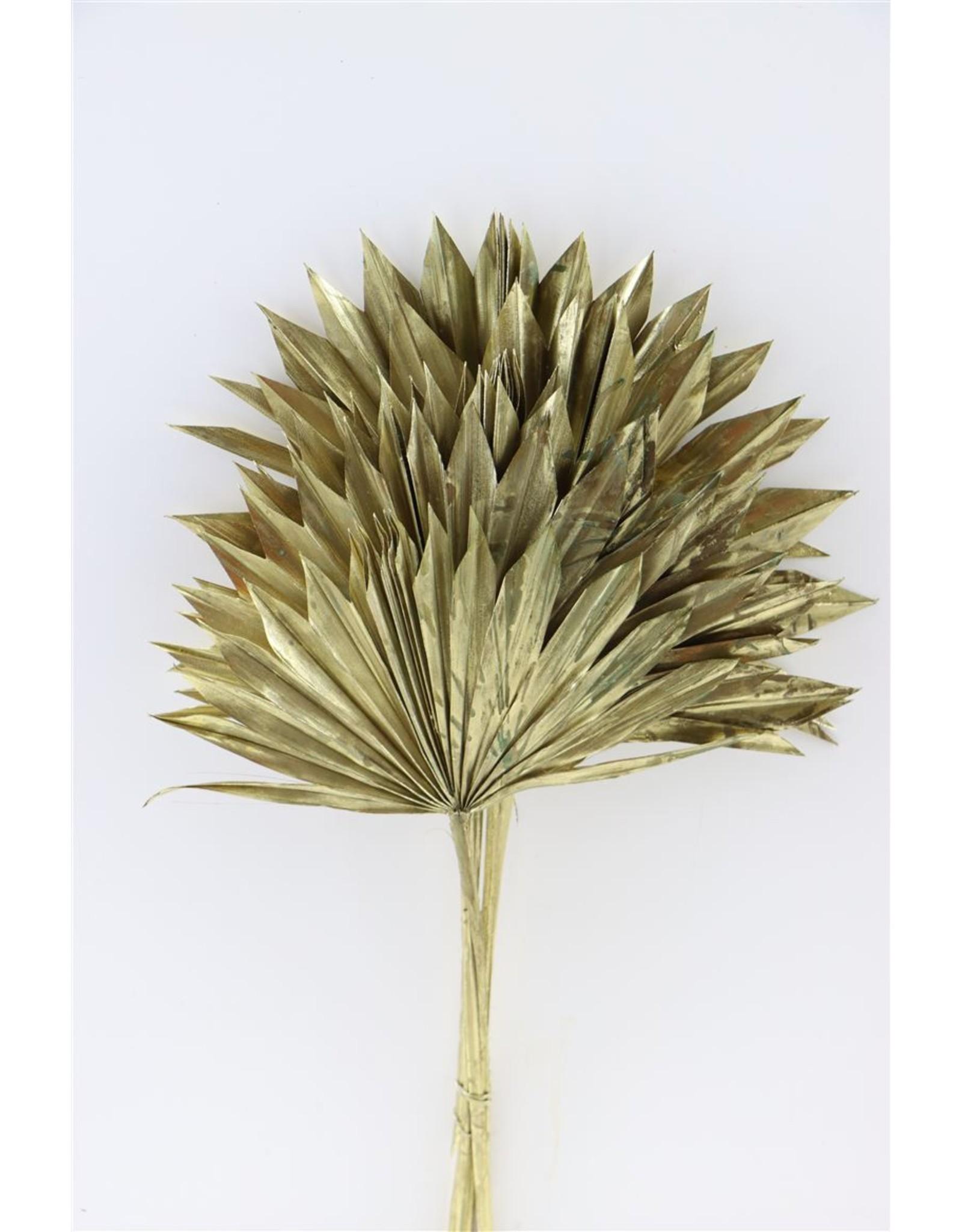 Dried Palm Sun 6pc Gold Bunch x 3