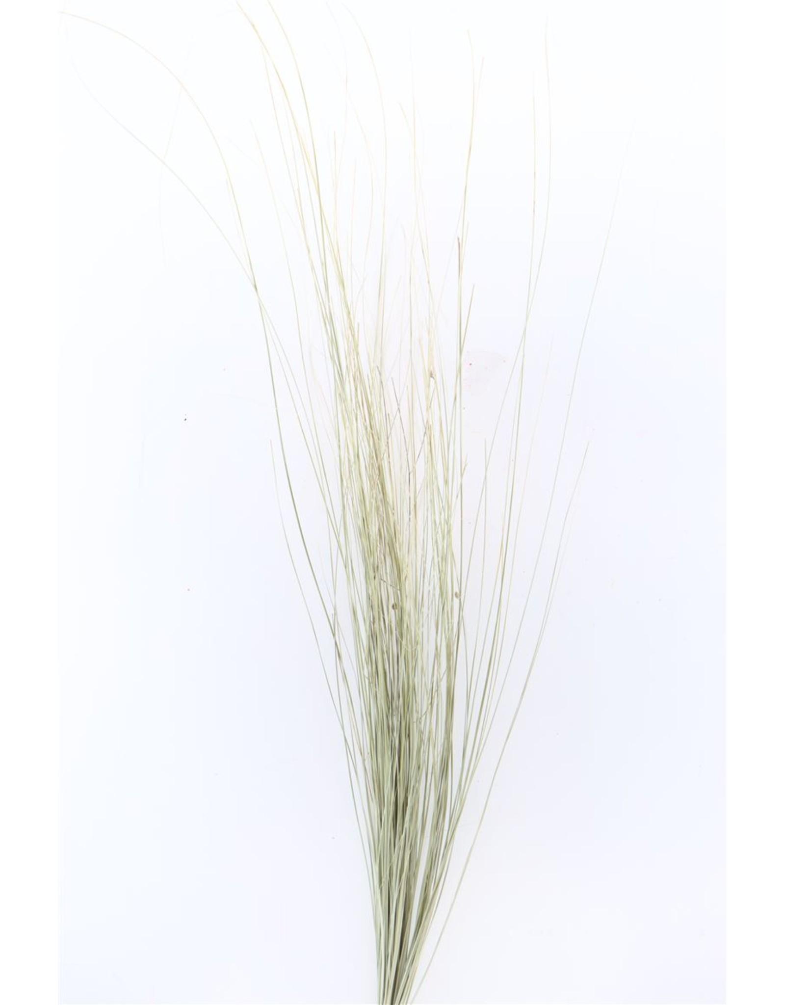 Dried Beargrass Long Bunch x 5