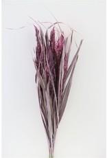 Dried Ornamental Grass Fr. Pink Bunch x 2