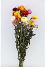 Dried Helichrysum Mixed Bunch x 2