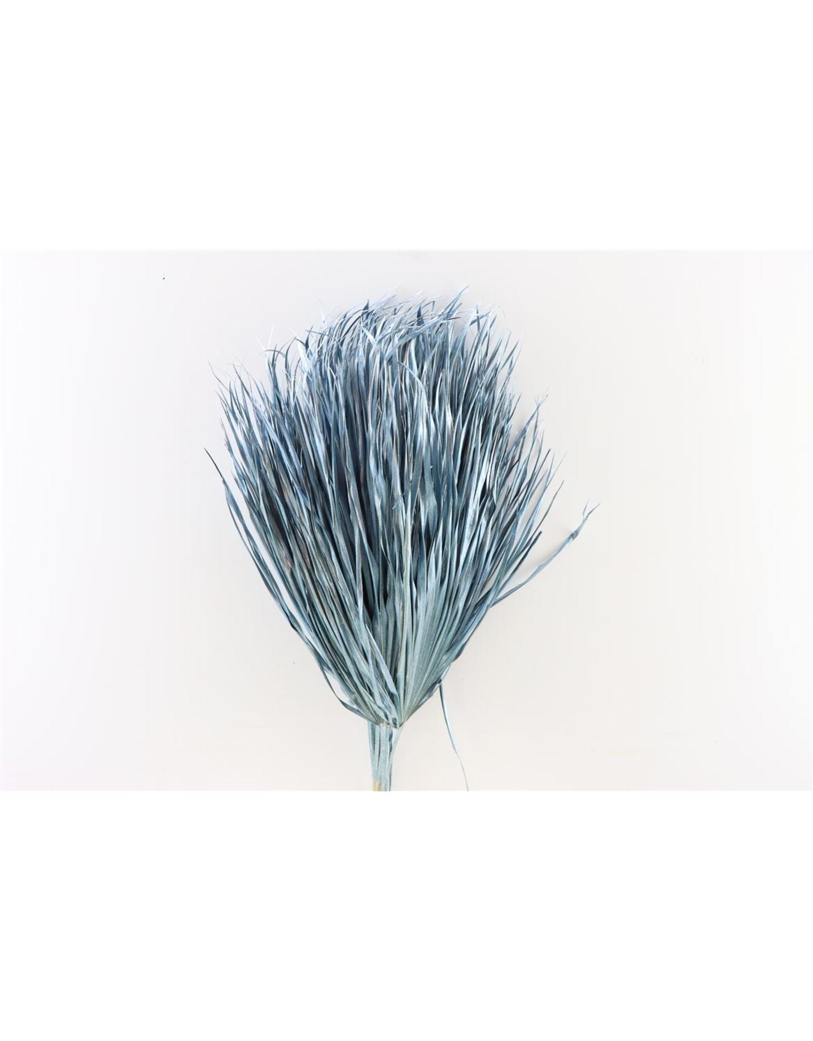 Dried Chamaerops (10tk) Metalic Blue Bunch x 1