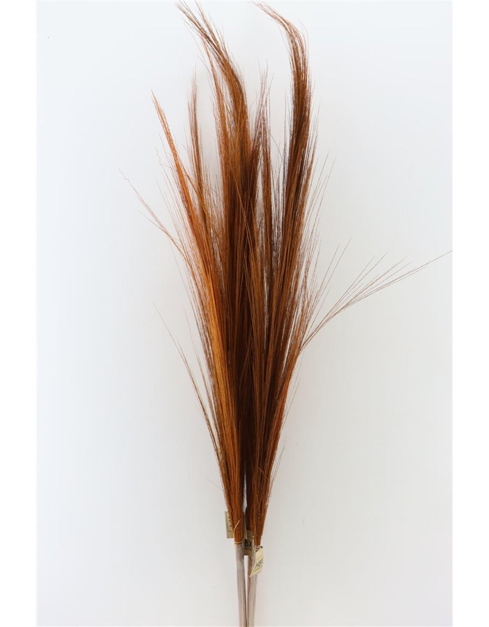 Dried Grain Grass 3pcs 100cm Orange x 4