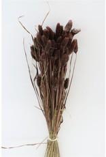 Dried Phalaris Brown Bunch Slv x 5