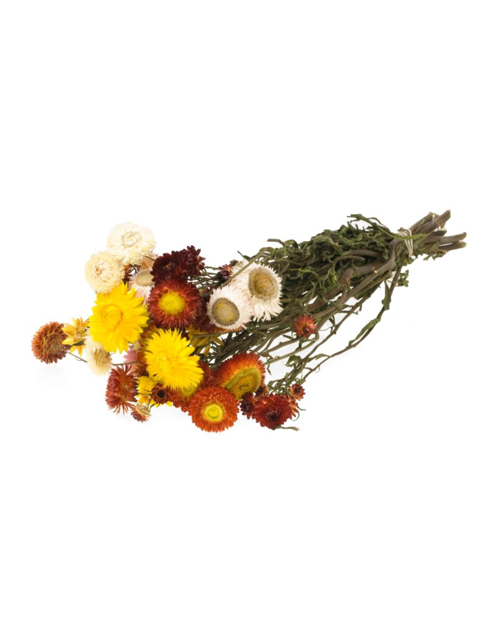 Helichrysum natural mix x 20