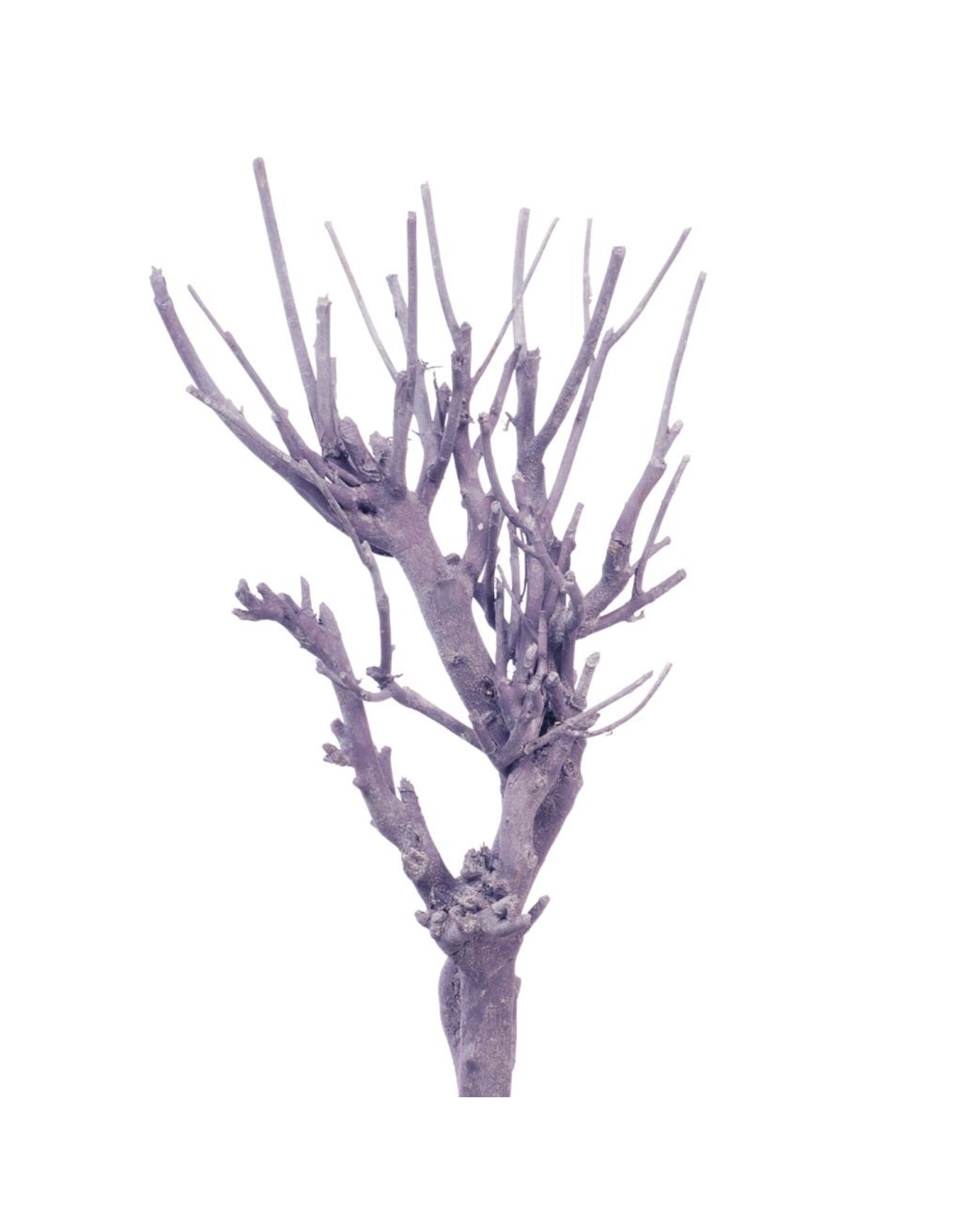 John branch NMG purple wash x 20