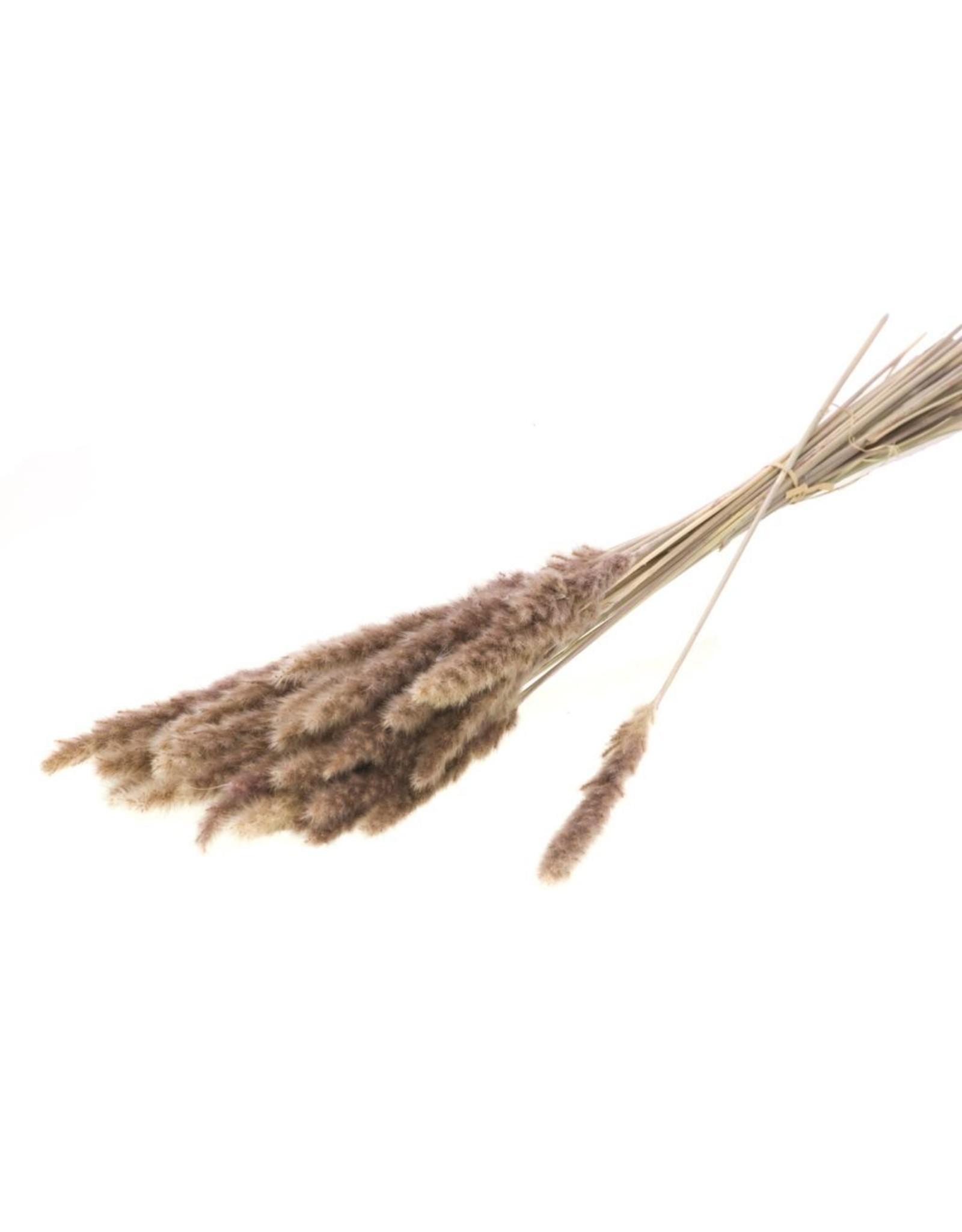 Reed bunch 70gr SB natural x 6