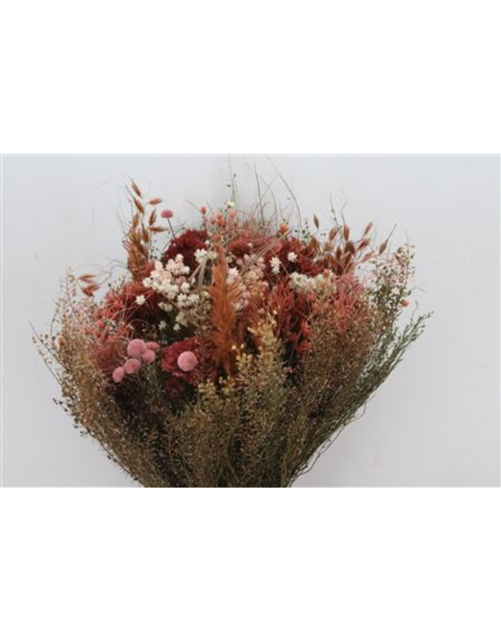 Dried Bouquet Seasons Light Pink Per Bunch x 2