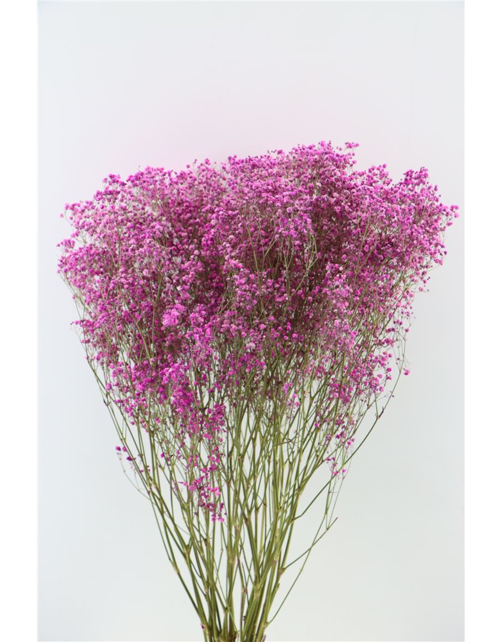Dried Gyps Cerise Extra Bunch x 5