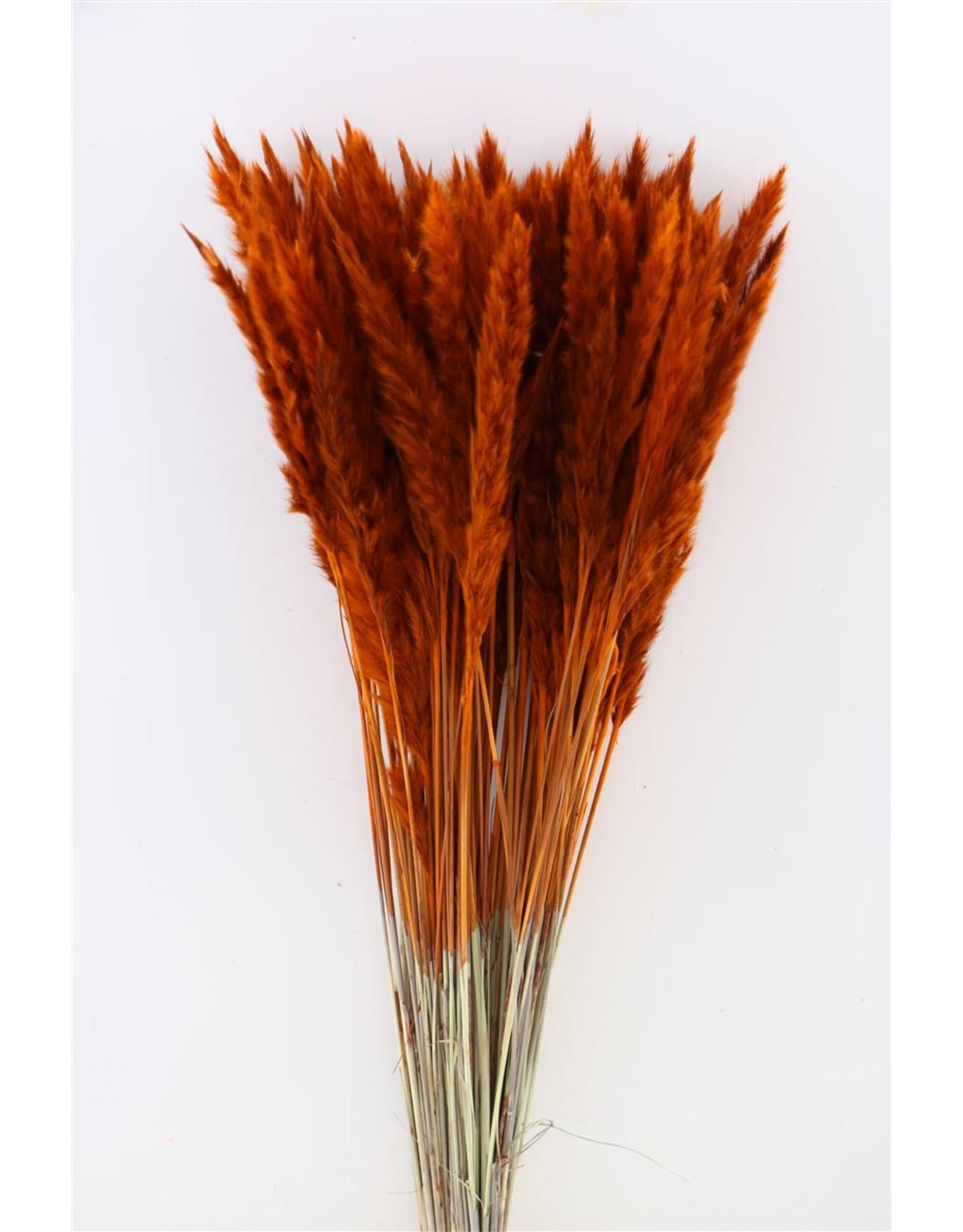 Dried Fluffy Pampas Orange Bunch x 3