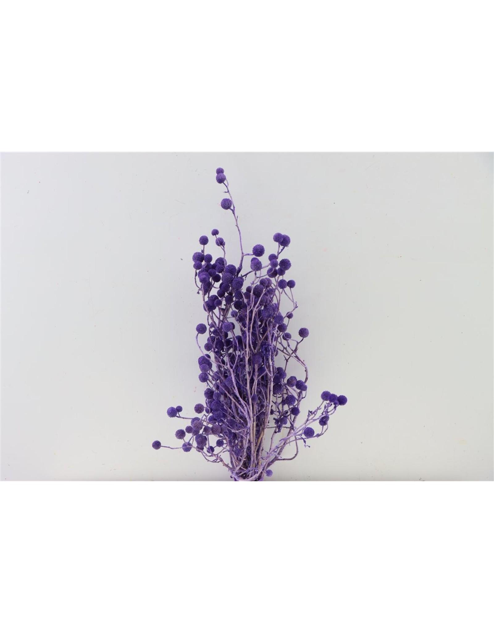 Dried Sago Purple Bunch x 5