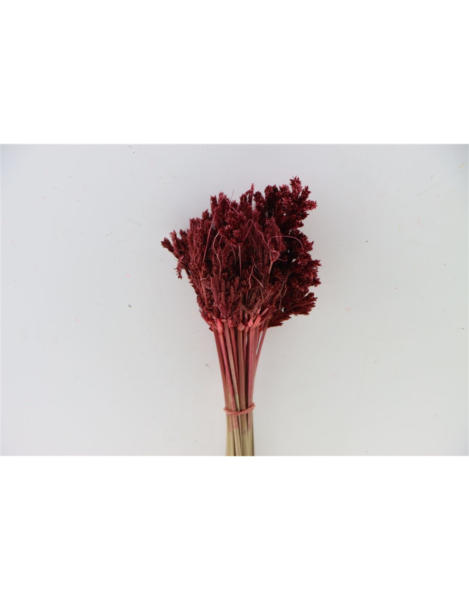 Dried Umbr. Sedge Big Leaf Red Bunch x 20
