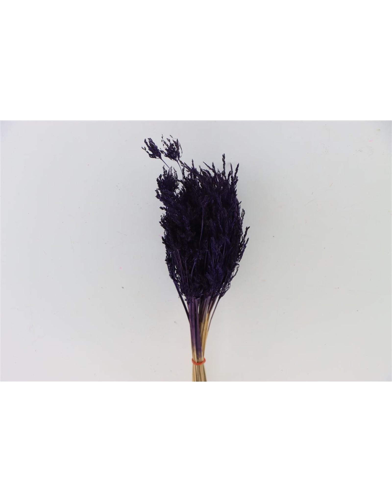 Dried Umbr. Sedge Sm. Leaf Purple Bunch x 20