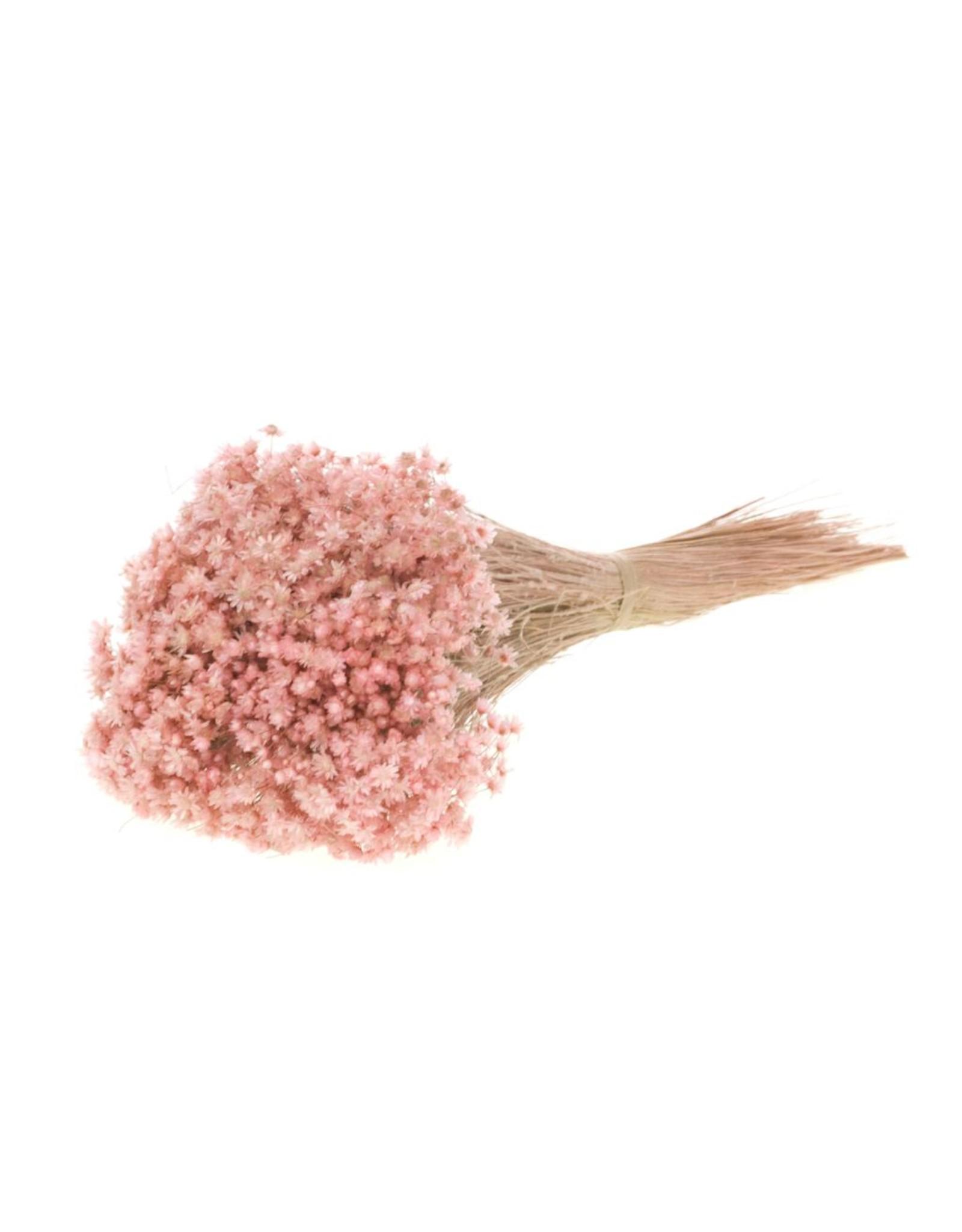 Marcela pink misty x 35