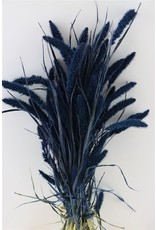 Dried Setaria Blauw Bunch x 1