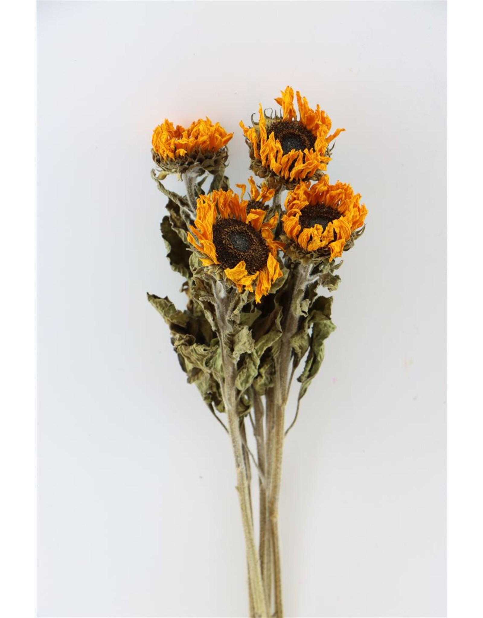 Dried Sunflower Yellow 5pcs Bunch x 1