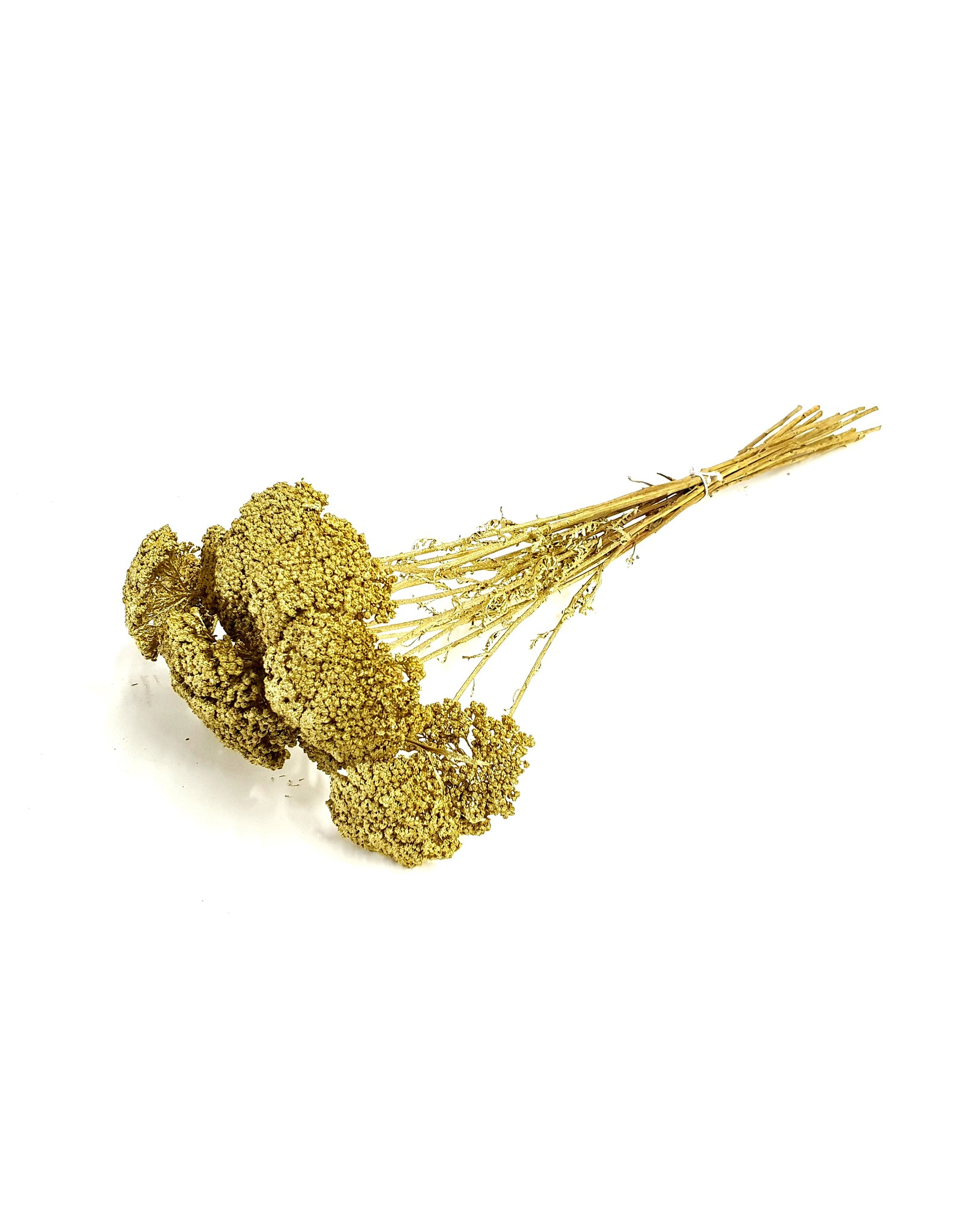 Achillea per stem Gold x 100