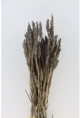 Dried Triticum Frosted Grey Bunch x 4