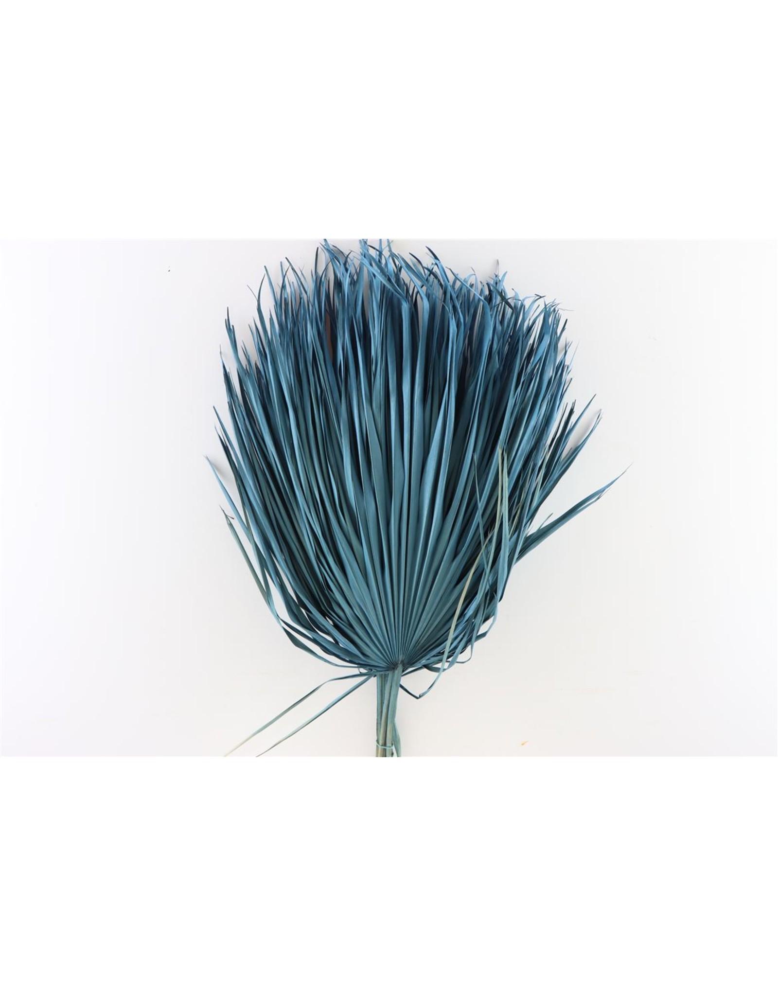 Dried Chamaerops (10tk) Light Blue Bunch x 1