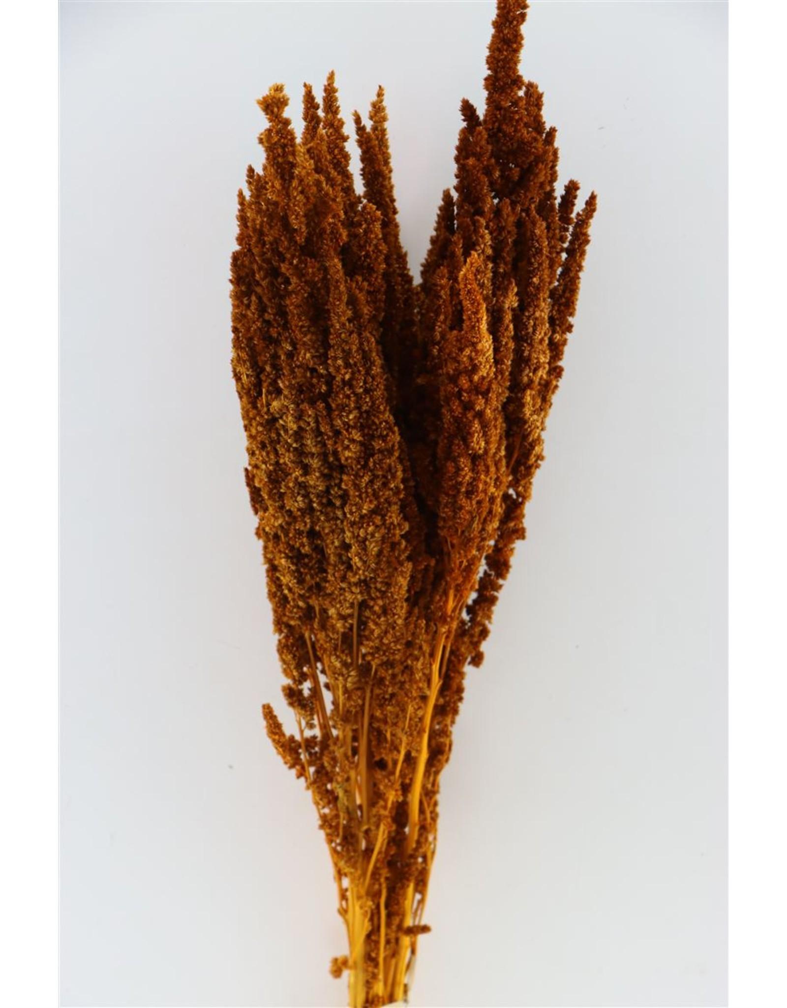 Pres Amaranthus Orange Bunch x 2