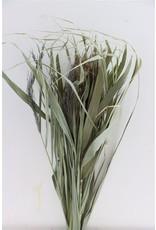 Dried Water Grass Bunch x 5