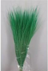 Dried Barba De Bode D. Green Bunch x 2