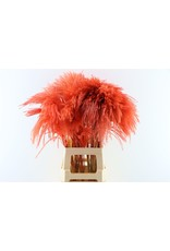 Dried Stipa Feather Red P. Stem x 50
