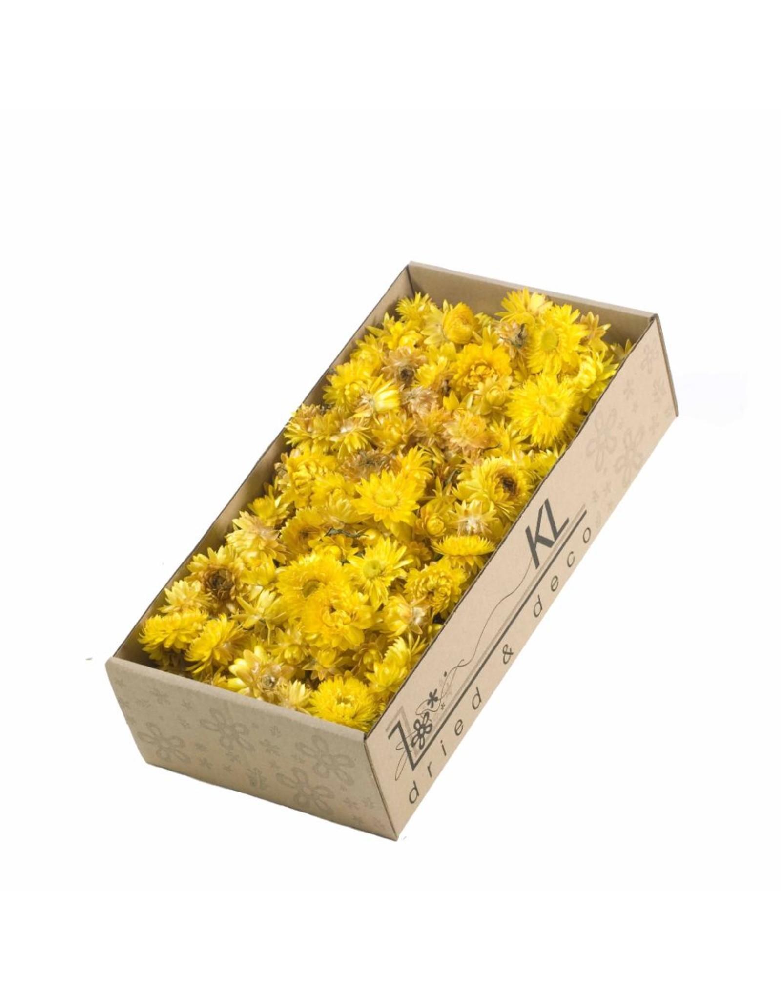Helichrysum heads 100gr SB natural yellow x 6