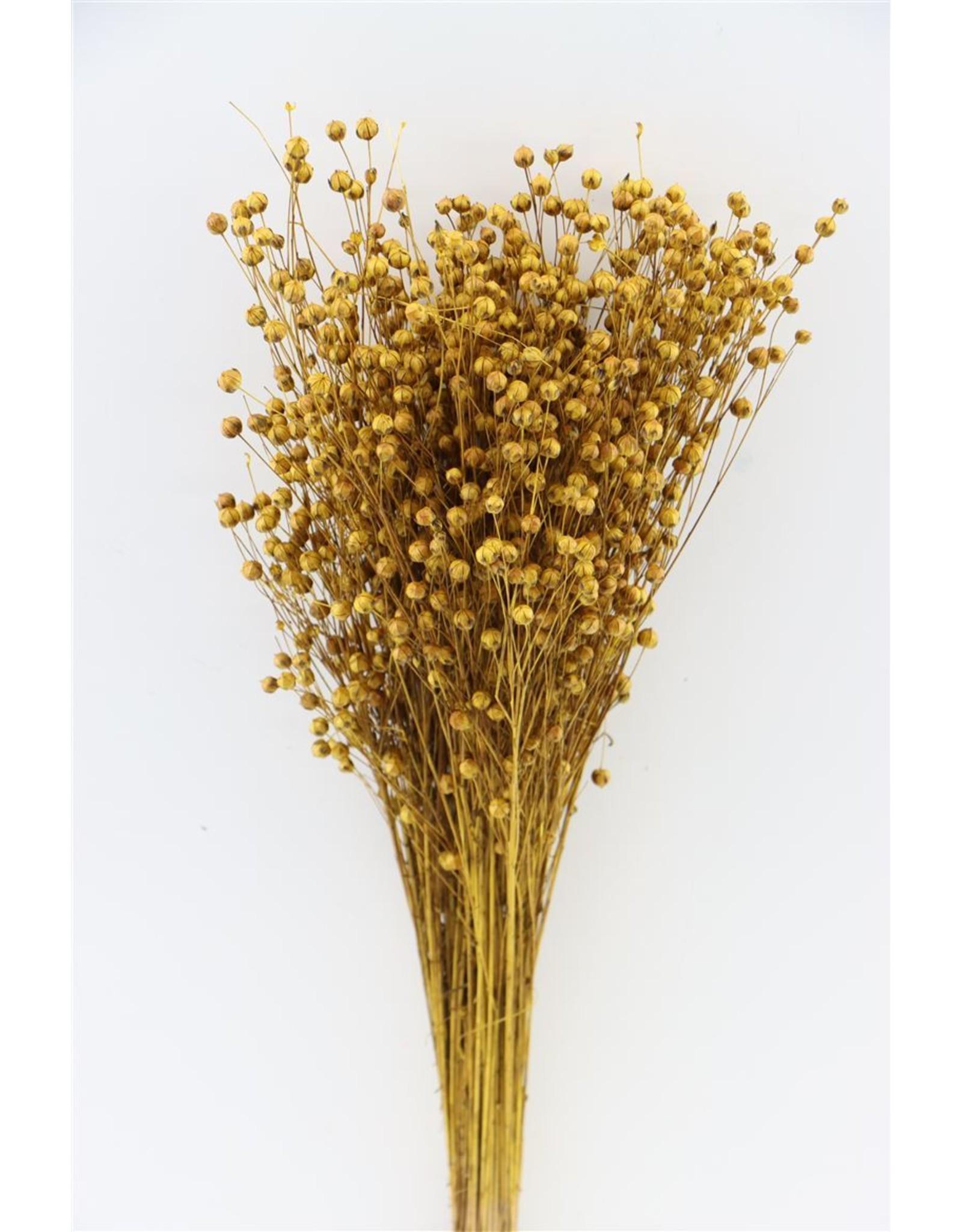 Dried Lino Vlas Ocker Yellow Slv Bunch x 2
