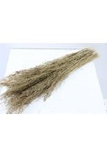 Dried Munni Grass Matt Gold Slv Bunch x 5