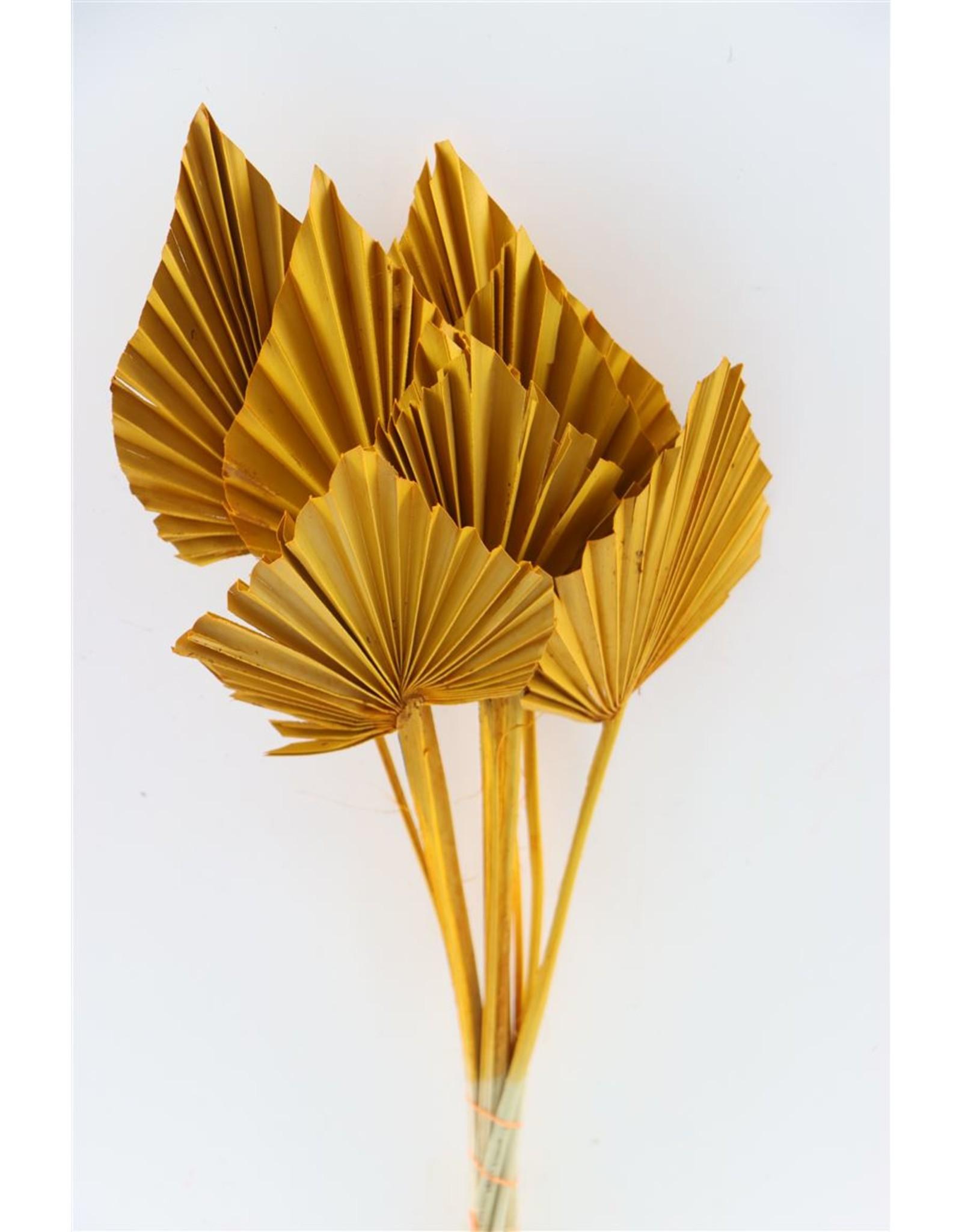 Dried Palm Spear 10pc Ocher Yellow Bunch x 3