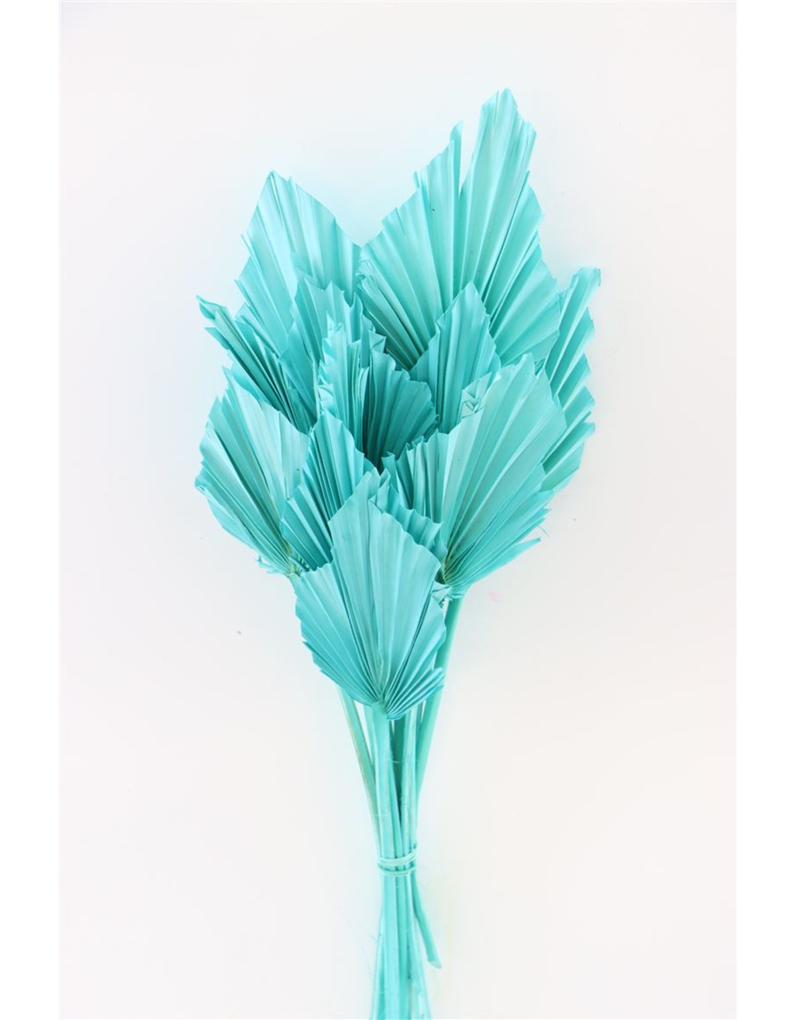 Dried Palm Spear 10pc Aquamarim Bunch x 3