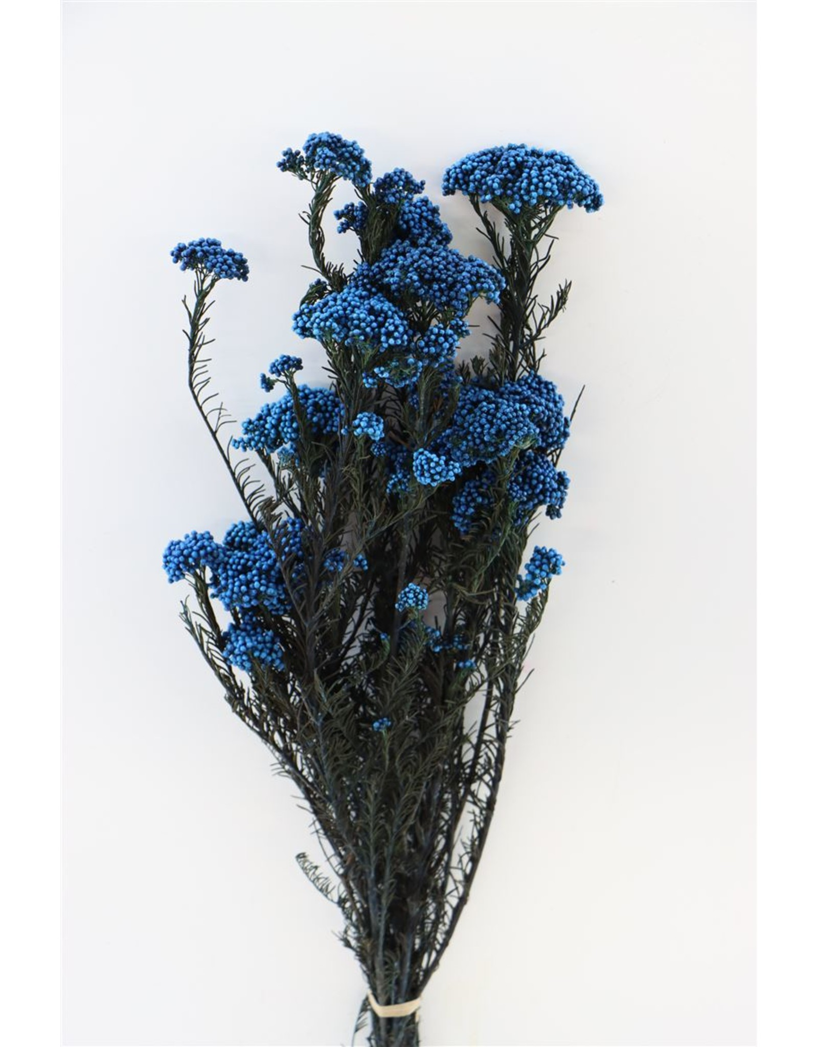 Pres Rice Flowers D. Blue Bunch x 2