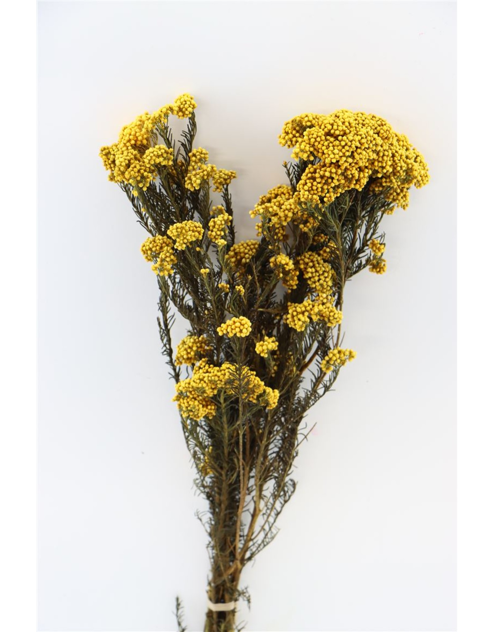 Pres Rice Flowers Yellow Bunch x 2